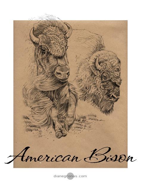 27 THUNDERING Stampede American Bison horiz kraft